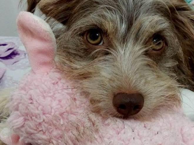 Cães e gatos resgatados das ruas vão ser modelos de calendário para 2017