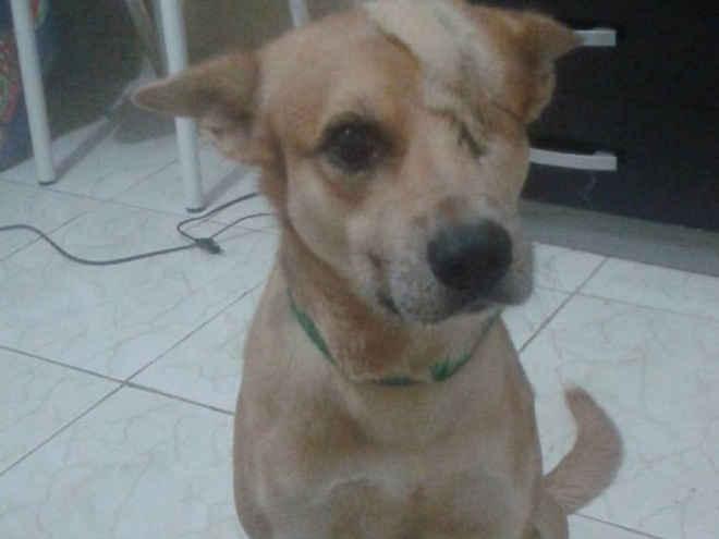 Cão cego de 1 olho e resgatado da rua ganha concurso de 'calendário animal'