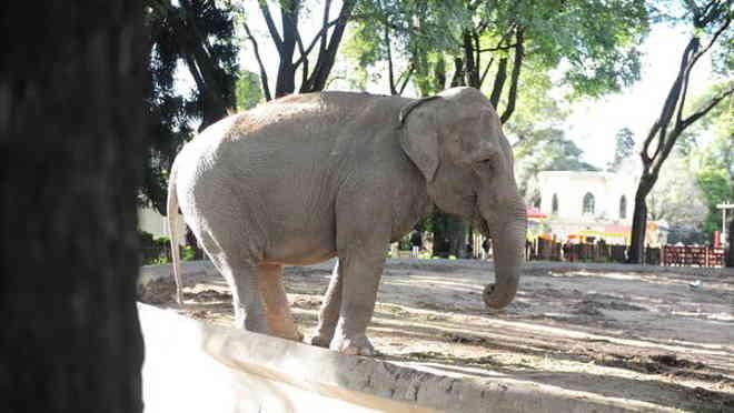 Três elefantes do zoo de Buenos Aires terão advogados