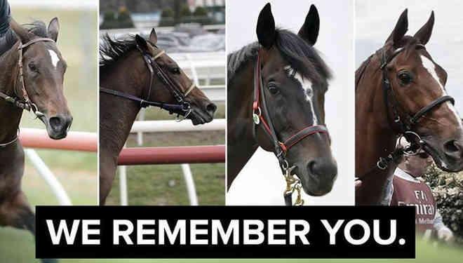 Todos esses cavalos morreram na mesma pista de corridas na Austrália