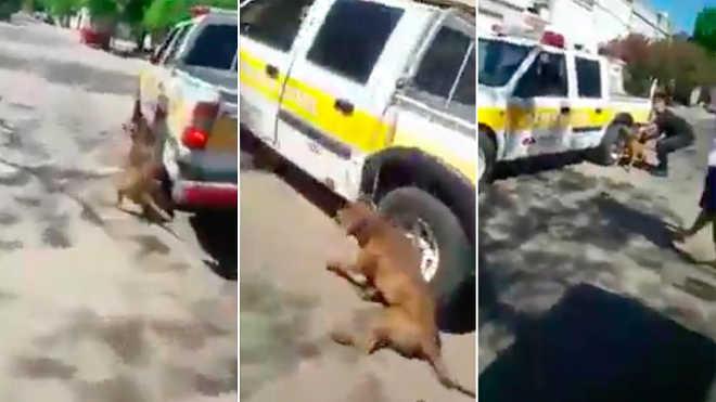 Funcionário público arrasta brutalmente um cão com sua caminhonete