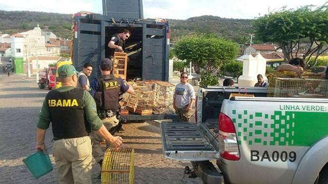 FPI: Primeira semana termina com mais de 1000 animais resgatados na Bahia