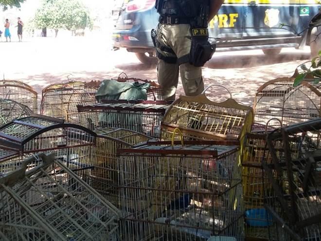 Operação apreende mais de 600 animais silvestres no norte da Bahia