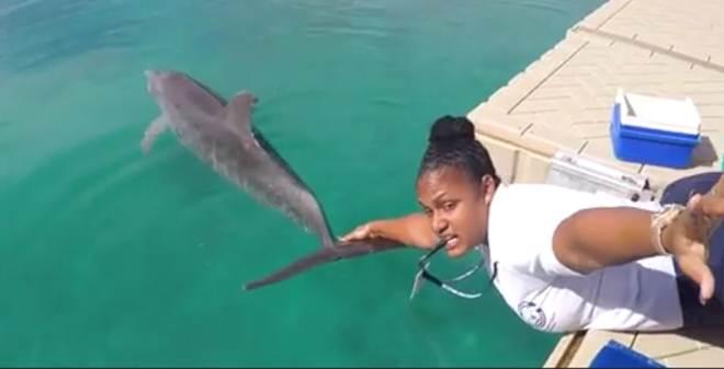 'Desafio do Manequim' com golfinhos enfurece ativistas; veja
