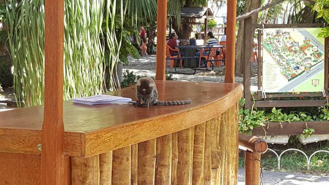 Parque Ecológico é obrigado readequar estrutura após denúncia de maus-tratos a animais em Fortaleza, CE