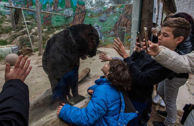 Esta fotógrafa está em uma missão de acabar com a vida selvagem em cativeiro mostrando como a vida nos zoológicos realmente é