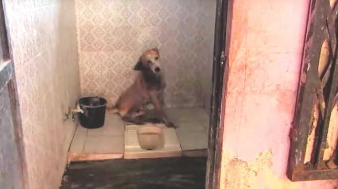 Cão doente é abandonado e procura lugar para morrer em paz. Até que família o encontra e o dá forças para lutar