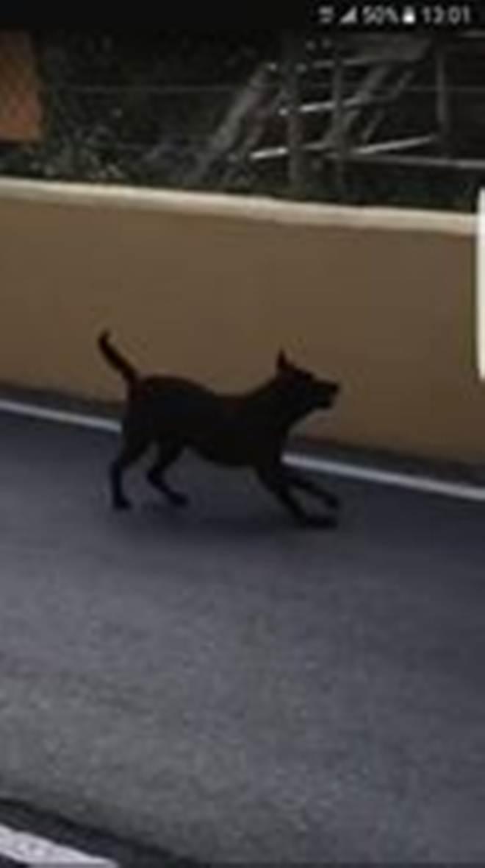 Cão invade a pista e é agredido a vassourada por funcionário do GP