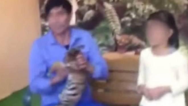 Funcionário de zoo na China maltrata filhote de tigre durante sessão de fotos; vídeo