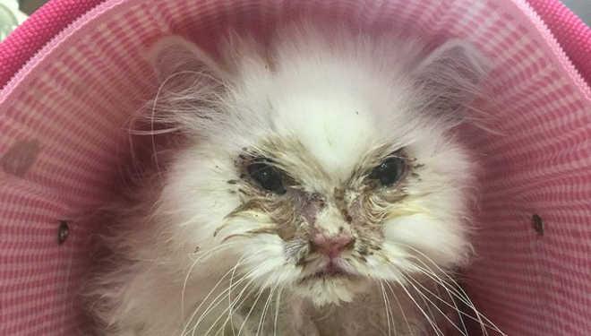 Mulher salva o gato que todo mundo disse ser inadotável