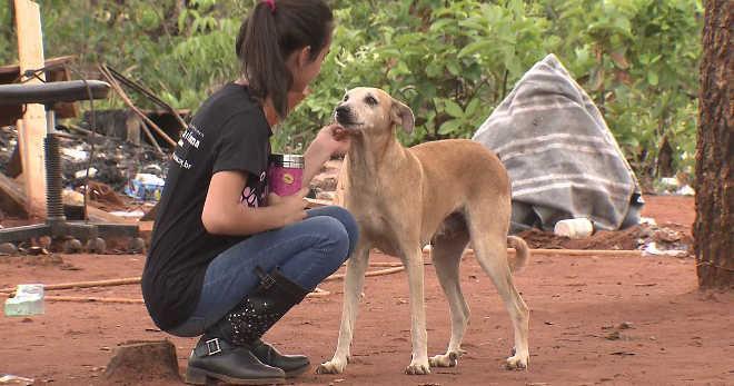 Grupo resgata animais abandonados em área pública desocupada em Brasília, DF