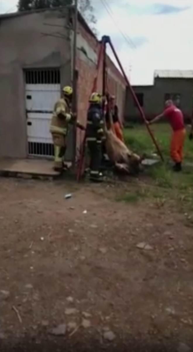 Cavalo é resgatado de fossa com 4 metros de profundidade no DF
