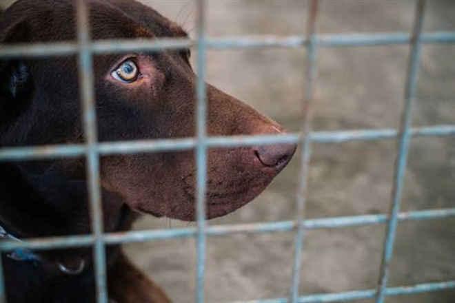 """Mulher que se dizia """"protetora de animais"""" matou 2.200 cães e gatos na Espanha"""