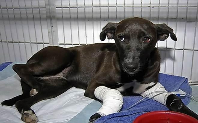 Mulher acusada de atropelar e matar cadela em Vitória (ES) é indiciada