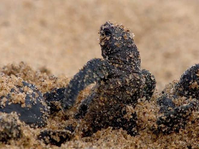 Estudos sobre contato de animais com a lama de rejeitos estão parados