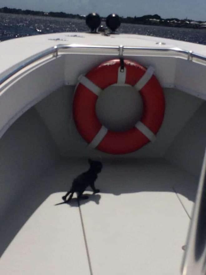 Representante salva gatinho prestes a se afogar, agarrado a ostras, debaixo de uma ponte