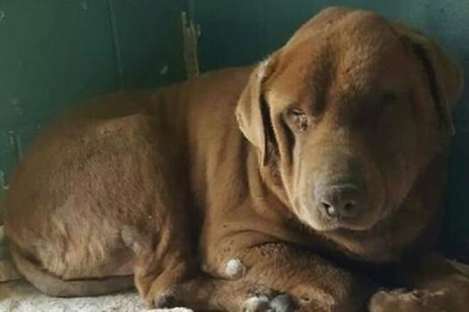 Ainda vivo, cão torturado foi encontrado suspenso em uma ponte, com o rosto colado