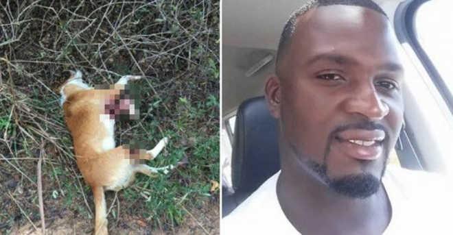 Homem que atirou em cão e postou foto para debochar foi preso