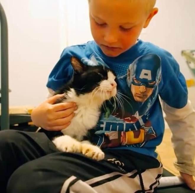 Gato tinha 20 anos quando encontrou um lar. Ninguém esperava que ele tivesse tanto amor para dar