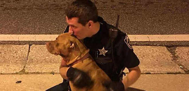 Cadelas confortadas por policiais durante resgate ganham nome de Justiça e Liberdade