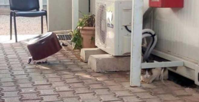 Militares espanhóis terão que responder contra maus-tratos de animais no Líbano