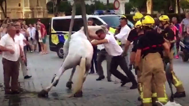 PACMA denuncia os maus-tratos que sofrem os cavalos que conduzem as carruagens de Sevilha