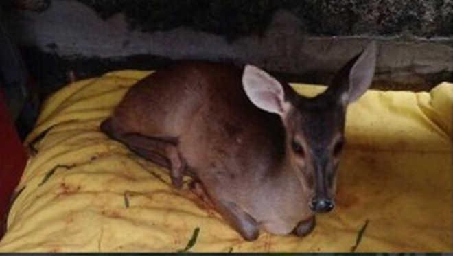 Rotam recaptura foragido e liberta dois animais silvestres em Goiânia, GO