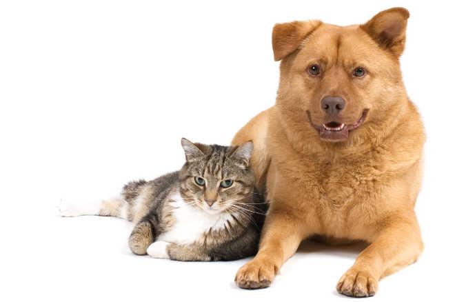 Entes públicos e ONG discutem a criação do Conselho Municipal de Bem-Estar Animal em Goiânia, GO