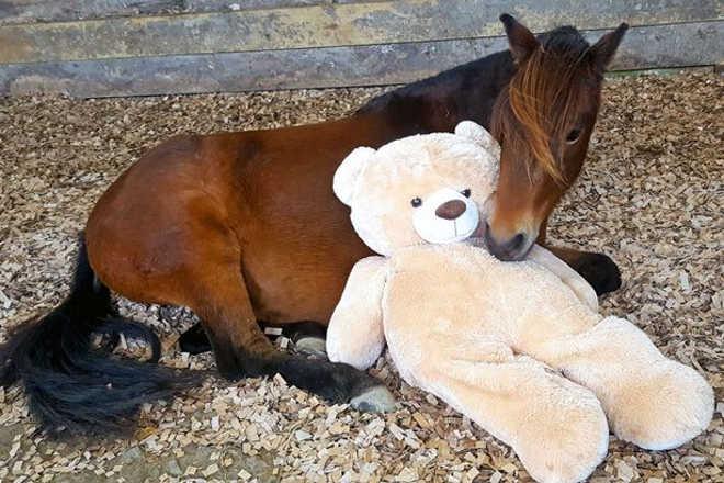 Cavalo é reunido com urso que ganhou quando ainda era um potrinho abandonado — e sua reação é uma gracinha