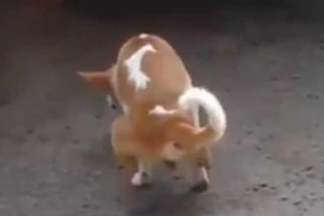 Amputaram-lhe duas patas, mas não desistiu de voltar a andar