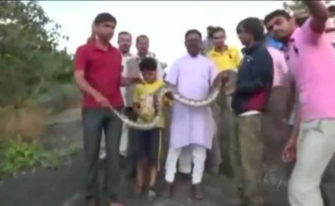 Homem tenta tirar 'selfie' com cobra e leva mordida. Assista ao impressionante vídeo