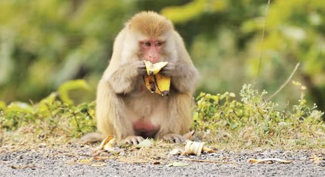 Quatro estudantes de medicina na Índia foram suspensos por torturarem brutalmente e matarem um macaco