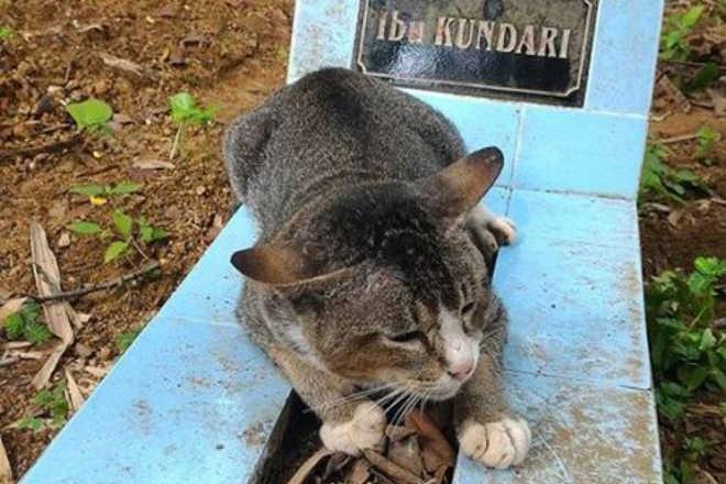 Gata visita todos os dias túmulo da tutora que morreu há um ano