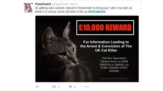 Redes sociais reforçam caçada a misterioso serial killer de gatos em Londres