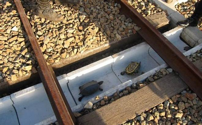 Ferroviária japonesa instala tubos entre trilhos para proteger tartarugas