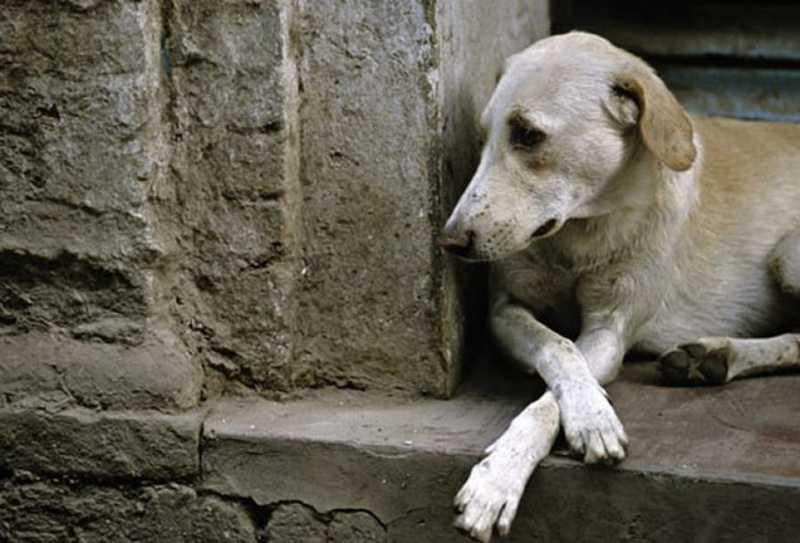 Justiça autoriza a invasão domiciliar para resgate de animais sob maus tratos (Foto: Reprodução Internet)