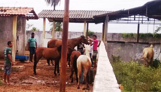 Centro de Zoonoses divulga balanço de apreensões de animais em vias públicas em Imperatriz, MA