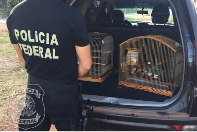 Operação Asas combate tráfico de animais silvestres no MA