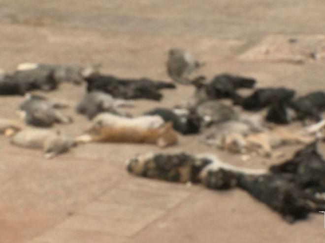 Morte de mais seis gatos é registrada e chama atenção de ativistas em São Luís, MA