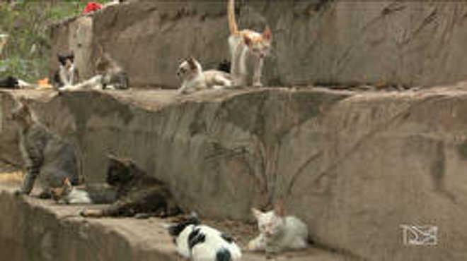 Ativistas cobram da Prefeitura de São Luís (MA) medidas em defesa dos animais