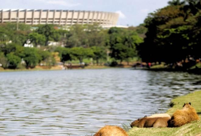 Cinco dias para retirar capivaras do Parque Ecológico em Belo Horizonte, MG