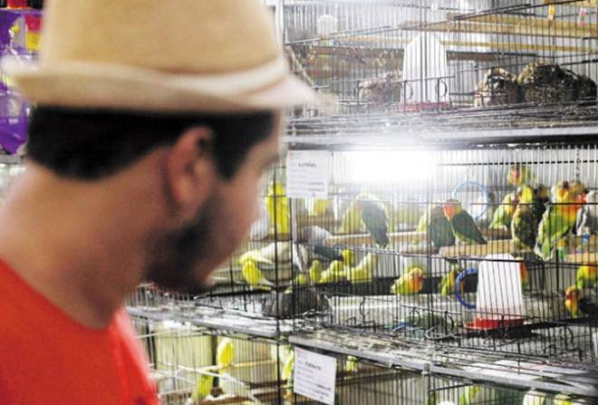 Animais não serão retirados até decisão final, diz Prefeitura de BH
