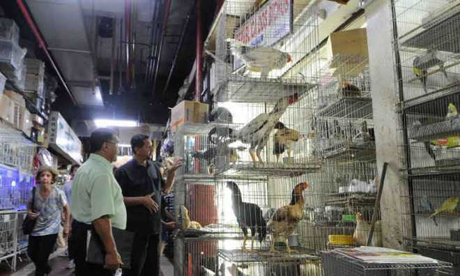 Justiça suspende venda de animais no Mercado Central de Belo Horizonte, MG