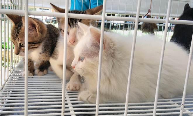 Cães e gatos ganham novo lar em evento de adoção na Praça do Bom Pastor, em Juiz de Fora, MG