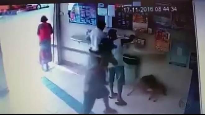 Cachorro é agredido a pauladas em Lambari, MG; vídeo