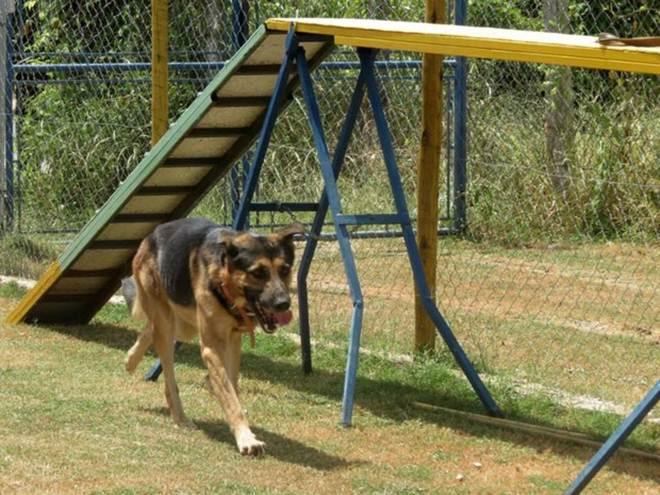 ONGs curam e acolhem cachorros abandonados em Montes Claros, MG