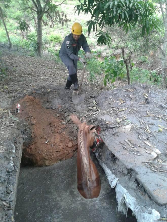 Corpo de Bombeiros resgata mula de fossa em Paracatu, MG