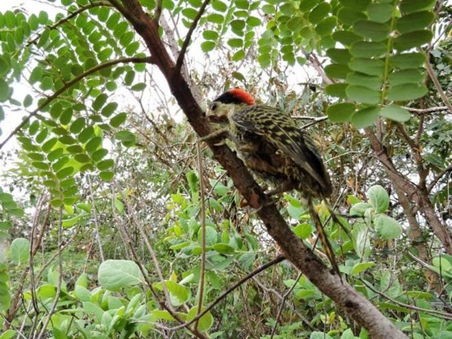 Dezenas de animais são soltos em reserva florestal de Uberlândia, MG
