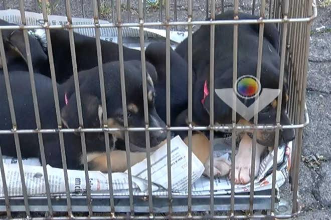 Centro de Zoonoses de Uberlândia (MG) realiza cadastro para castração de animais para 2017