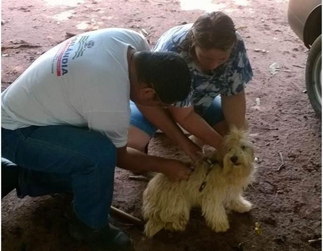 Vacinação antirrábica canina atinge 91% da meta em Brasilândia, MS